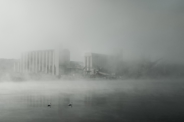 Cygnes et silos - JB Barasco