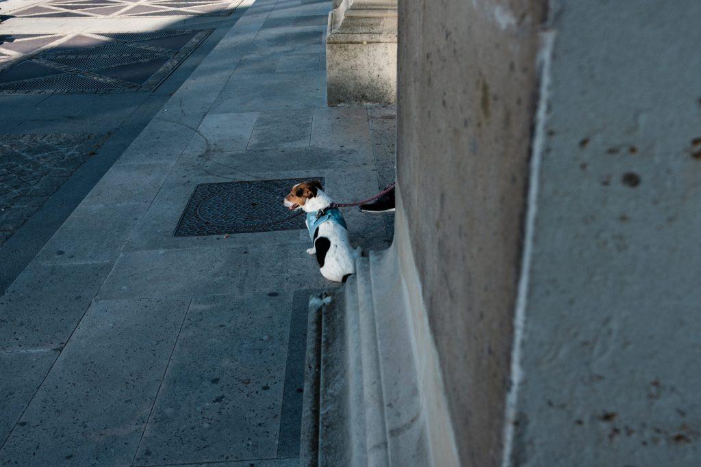 Thomas-Hammoudi-AdieuParis-Street-photography_02